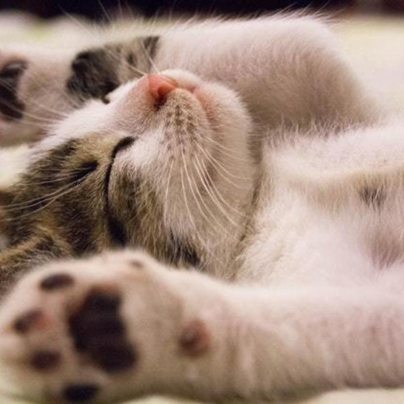 ペットに優しい家づくり「ネコ編」!快適に暮らすためのアイデアをご紹介