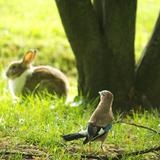 ペットに優しい家づくり「ウサギ・小鳥編」!快適に暮らすためのアイデアをご紹介