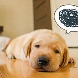 【監修】体調不良はシックハウス症候群が原因!?その原因と対策を徹底解説します!
